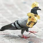 A_Legendary_Pigeon
